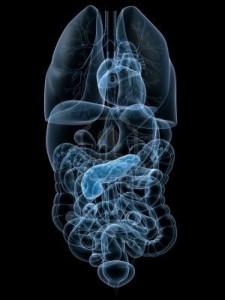 viscera rontgen, microbioom