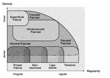 fascia-schematisch