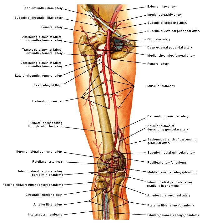 rechter onderbeen arterieel