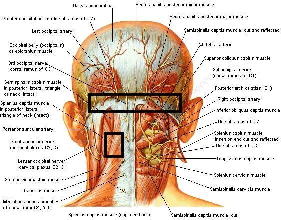 achter hoofdpijn www.osteopathie-ilbrink.nl